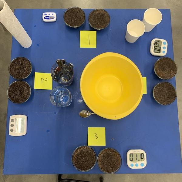 A coffee cupping set-up ready to be tasted